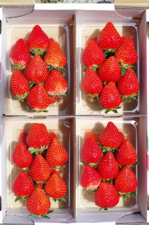 Okihara strawberry farm とちおとめ大玉