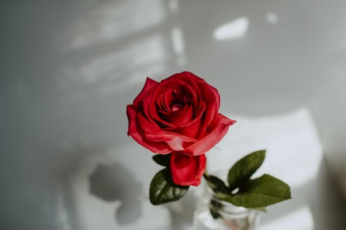 プロポーズ用のバラのイメージ写真