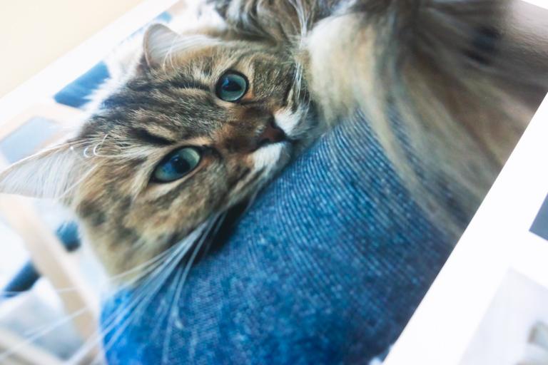 MyBook_マイブック_猫を写した写真
